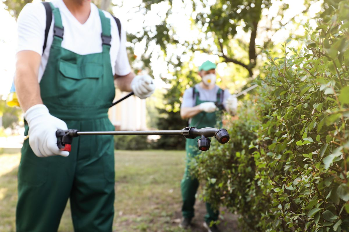A pest control specialist wearing green overalls, white short-sleeved shirt, and white gloves uses a black wand to spray pest control solution on a green bush.
