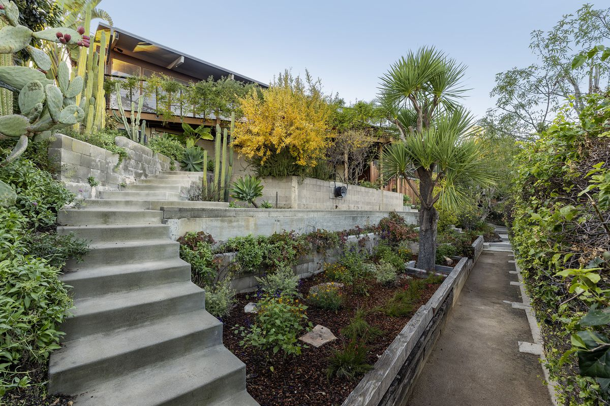 Cactuses and other native plants surround the home and flank a concrete pathway and concrete stairs.