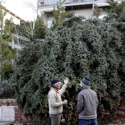 John Wood and Lance Deeter look over the downed tree on Wood's property on Elizabeth Street in Salt Lake City on Thursday, Dec. 1, 2011.
