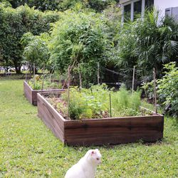 By the way, the cat is a big fan of the tomatoes.