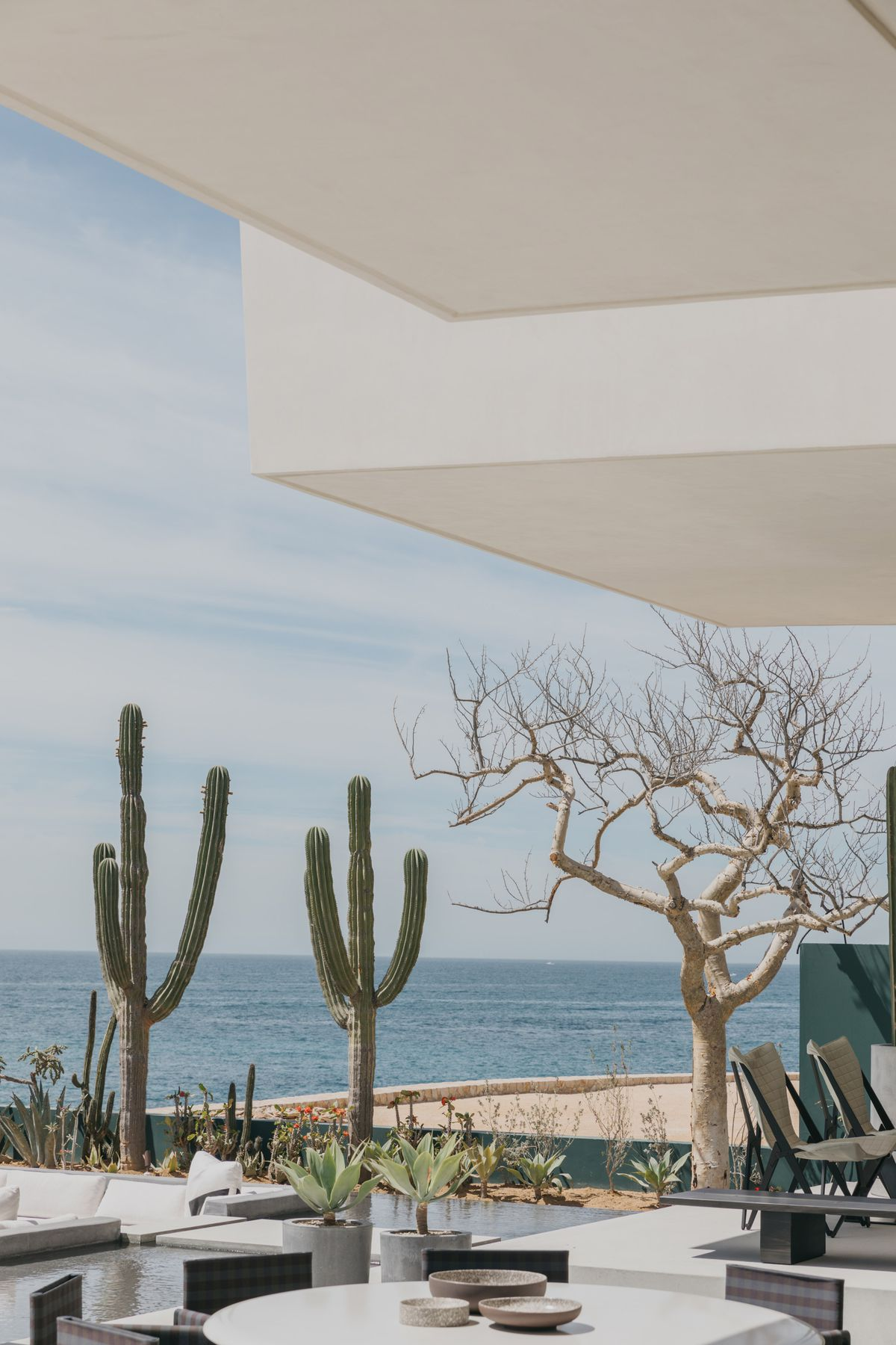 An outdoor terrace overlooks cacti, a tree, and the ocean.