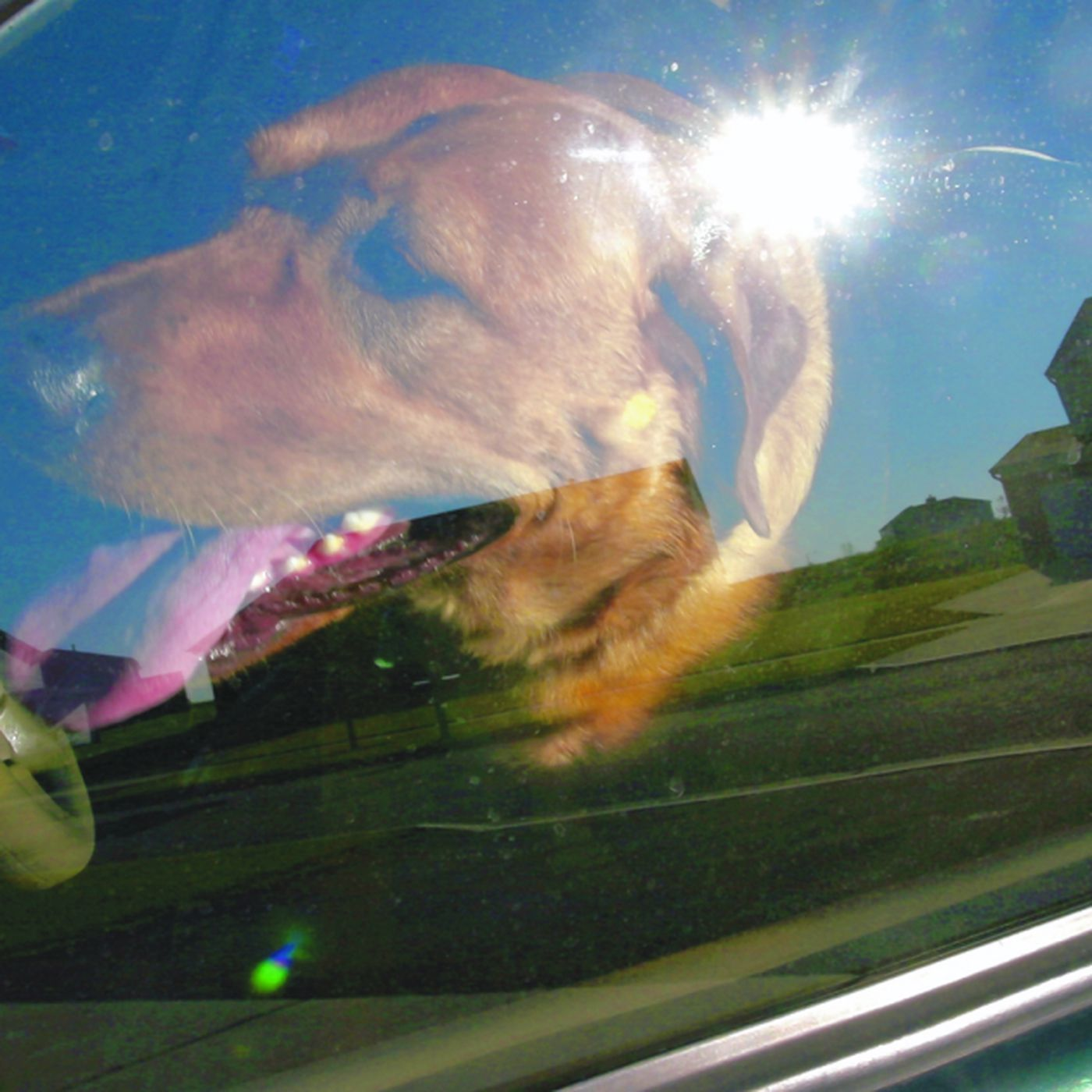 Police and animal control empowered to break into cars with