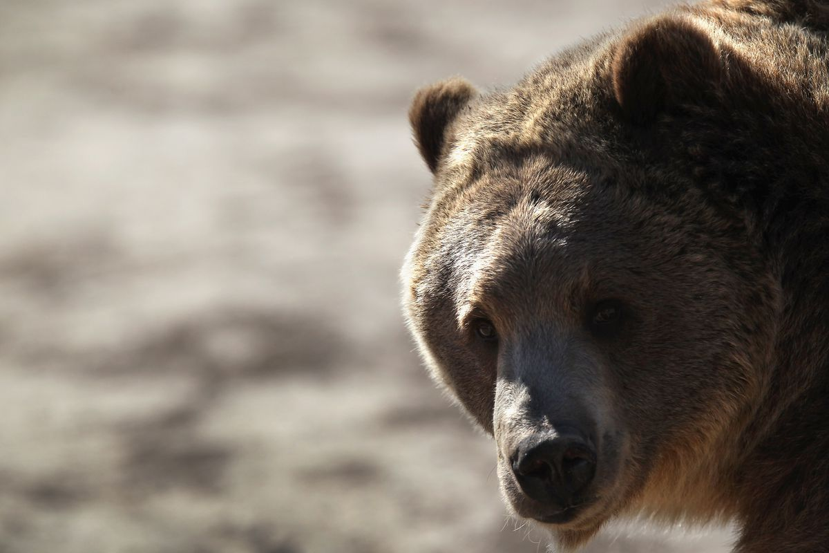 Animal Sanctuary Rescues And Shelters Abused And Abandoned Wildlife