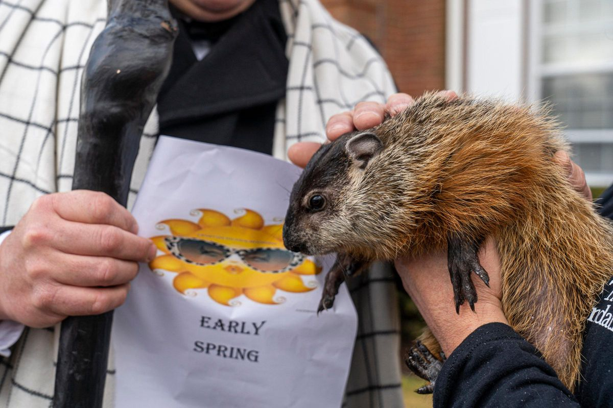 Quigley the Groundhog on Groundhog Day in Quogue, NY