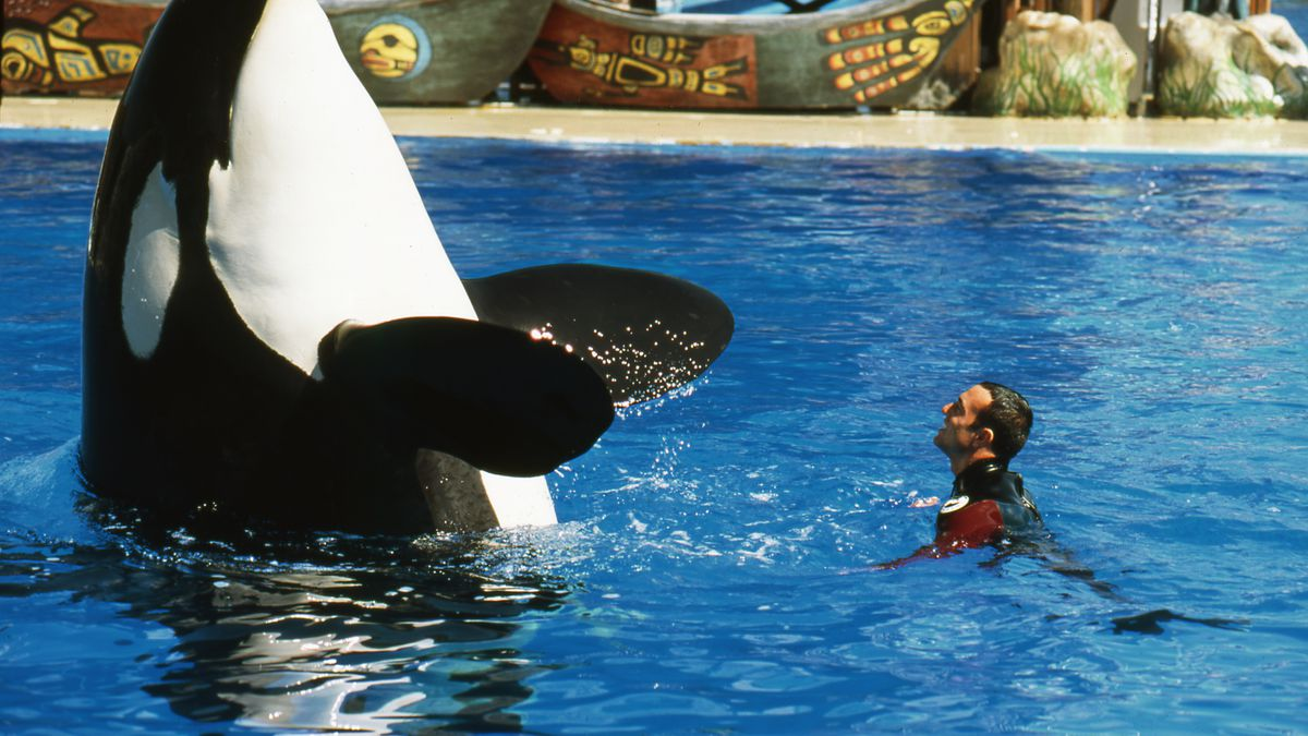 essay on killer whales in captivity