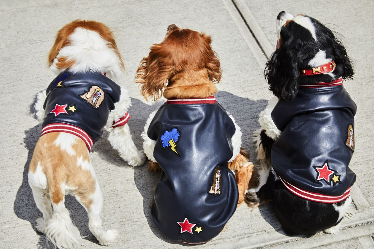 Three dogs in bomber jackets