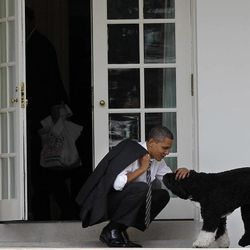 FILE - In this March 15, 2012, file photo, President Barack Obama pets the family dog Bo, a Portuguese water dog, outside the Oval Office of the White House in Washington. So let's get all the puns out of the way, shall we? It's the issue with legs _ four of them. The doggone thing won't go away. Has the presidential race just gone to the dogs? Or are we simply in those dog days between the primary season and the start of the general election? Whatever it is, the political Mommy Wars seem to have given way, at least temporarily, to the Doggy Wars, with an effort by supporters of both Mitt Romney and Obama to gain points with the Doggy Vote. That's dog owners, not the dogs themselves _ at least for now.