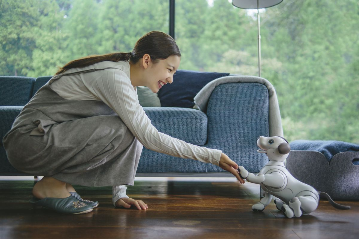 Human shaking hands with robot puppy