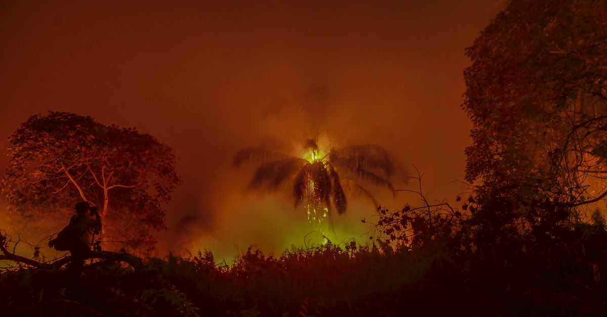 The Covid-19 pandemic is threatening vital rainforests
