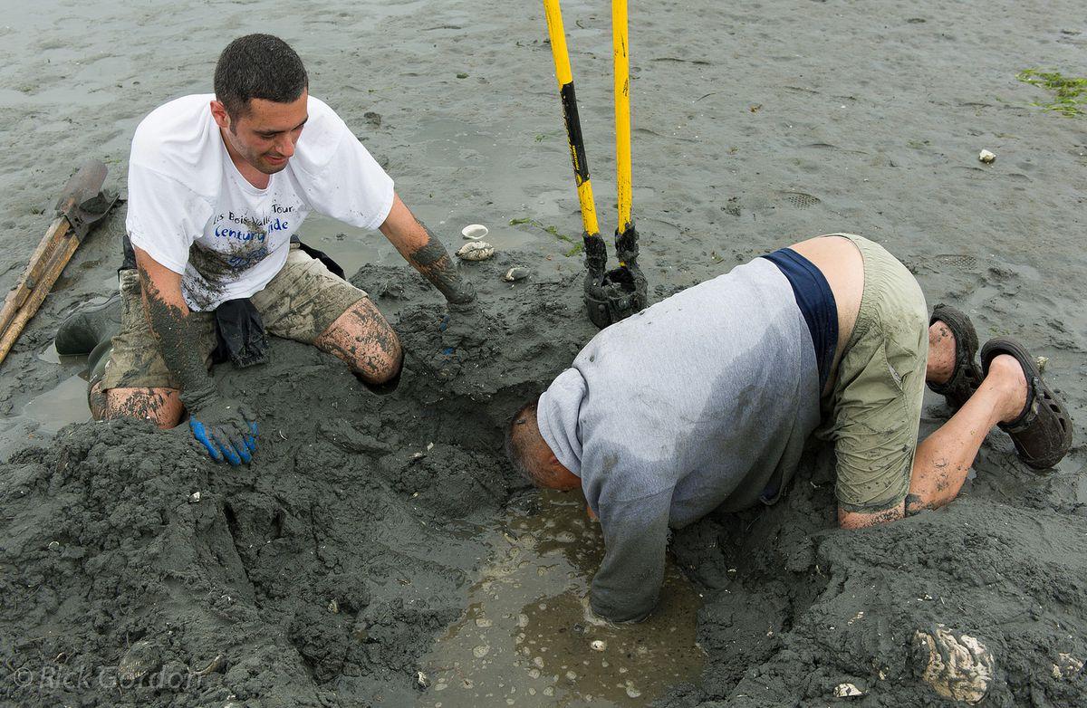 Island Harvest Jobs