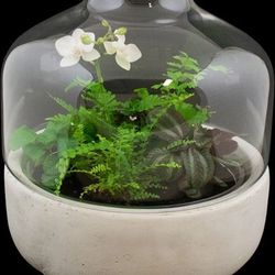 """<strong>Winston Flowers</strong> Garden Under Glass, <a href=""""http://www.winstonflowers.com/Collection/Flowering-Plants/Garden-Under-Glass"""">$195</a>"""