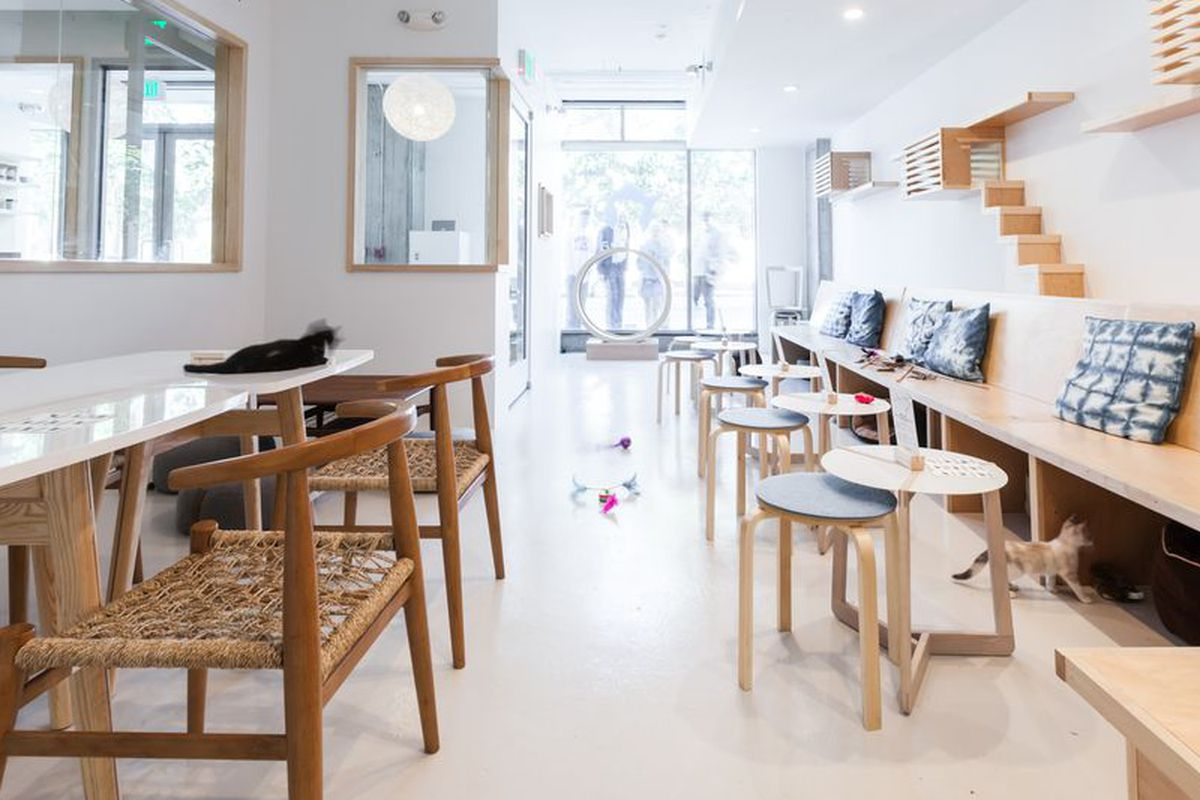 Kawaii Kitty Cafe Wants To Be Philly S First Cat Cafe Eater Philly