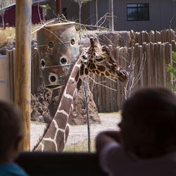 Children look at a giraffe while it eats in the African Savanna exhibit at Utah's Hogle Zoo in Salt Lake City on Wednesday, July 12, 2017.
