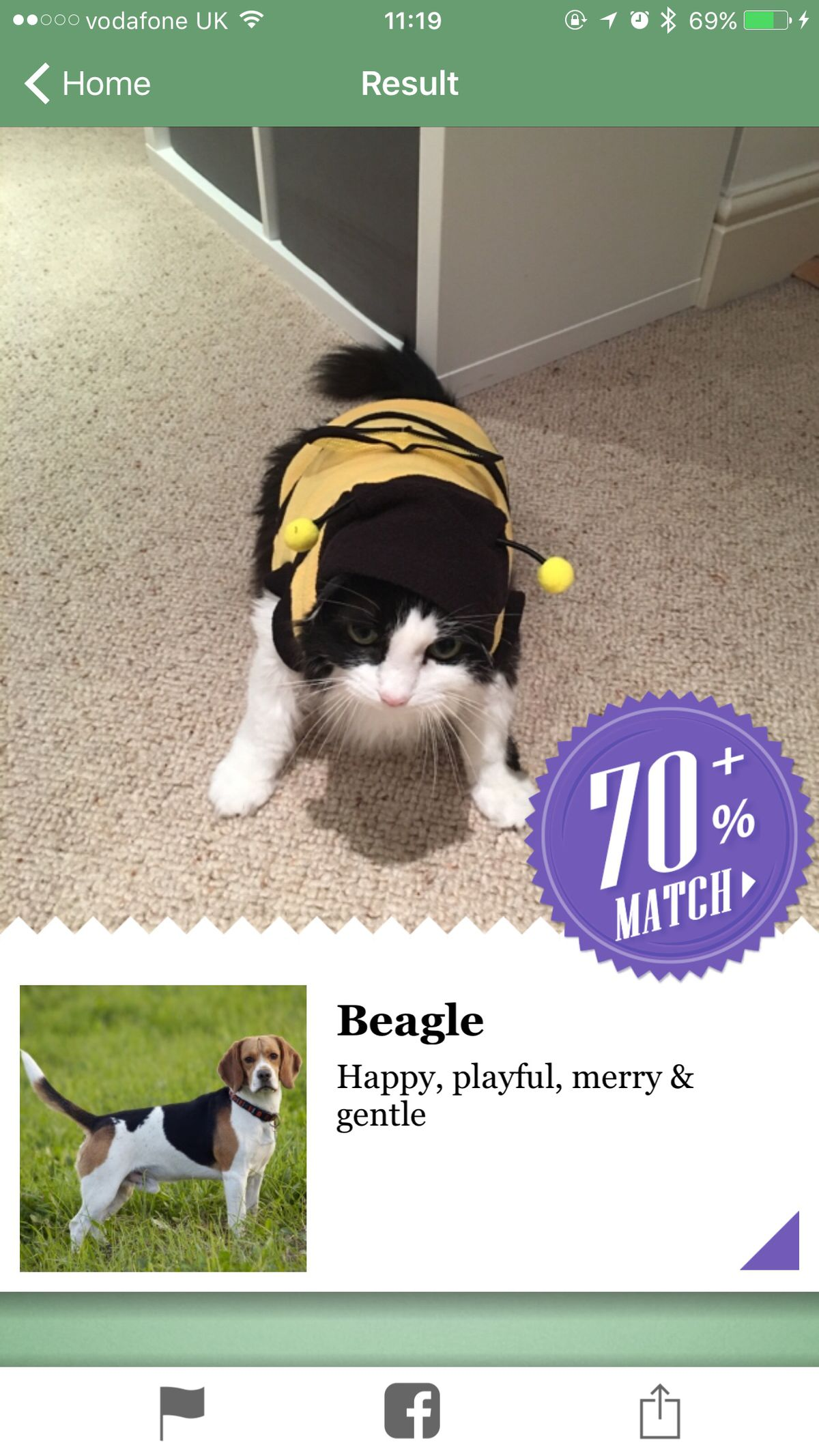 Microsoft's new iPhone app thinks my annoying cat is 70