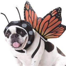 """<strong>Animal Planet</strong> Butterfly Dog Costume, <a href=""""http://www.amazon.com/Animal-Planet-PET20101-Butterfly-Costume/dp/B004ZKU128/"""">$11.57</a> at Amazon"""