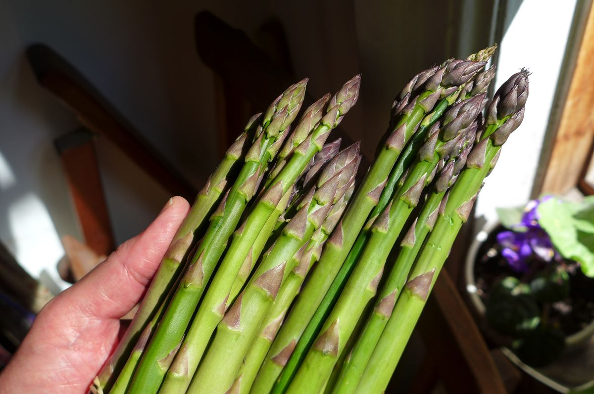 A hand holds a bunch of asparagus.