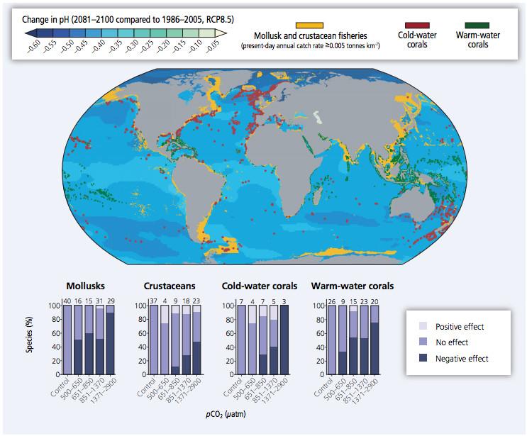 ocean acidfication worldwide