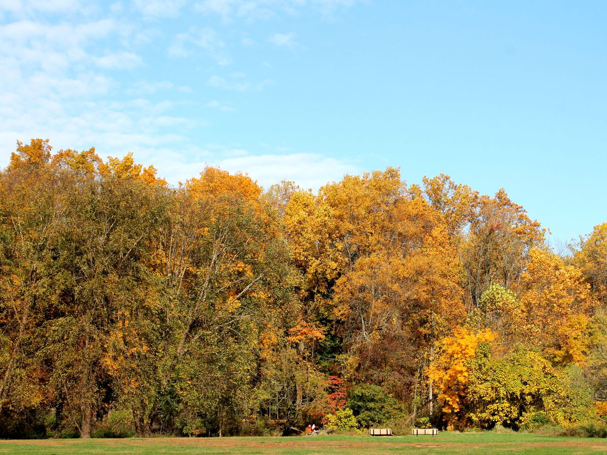 Trees with colorful autumn leaves at Pennypack Park in Philadelphia.
