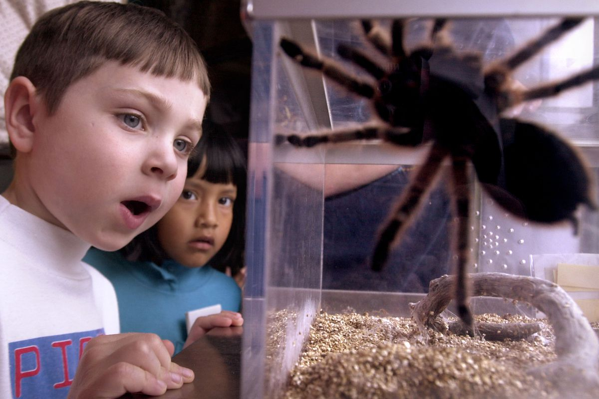 Smithsonian Holds Insect Expo