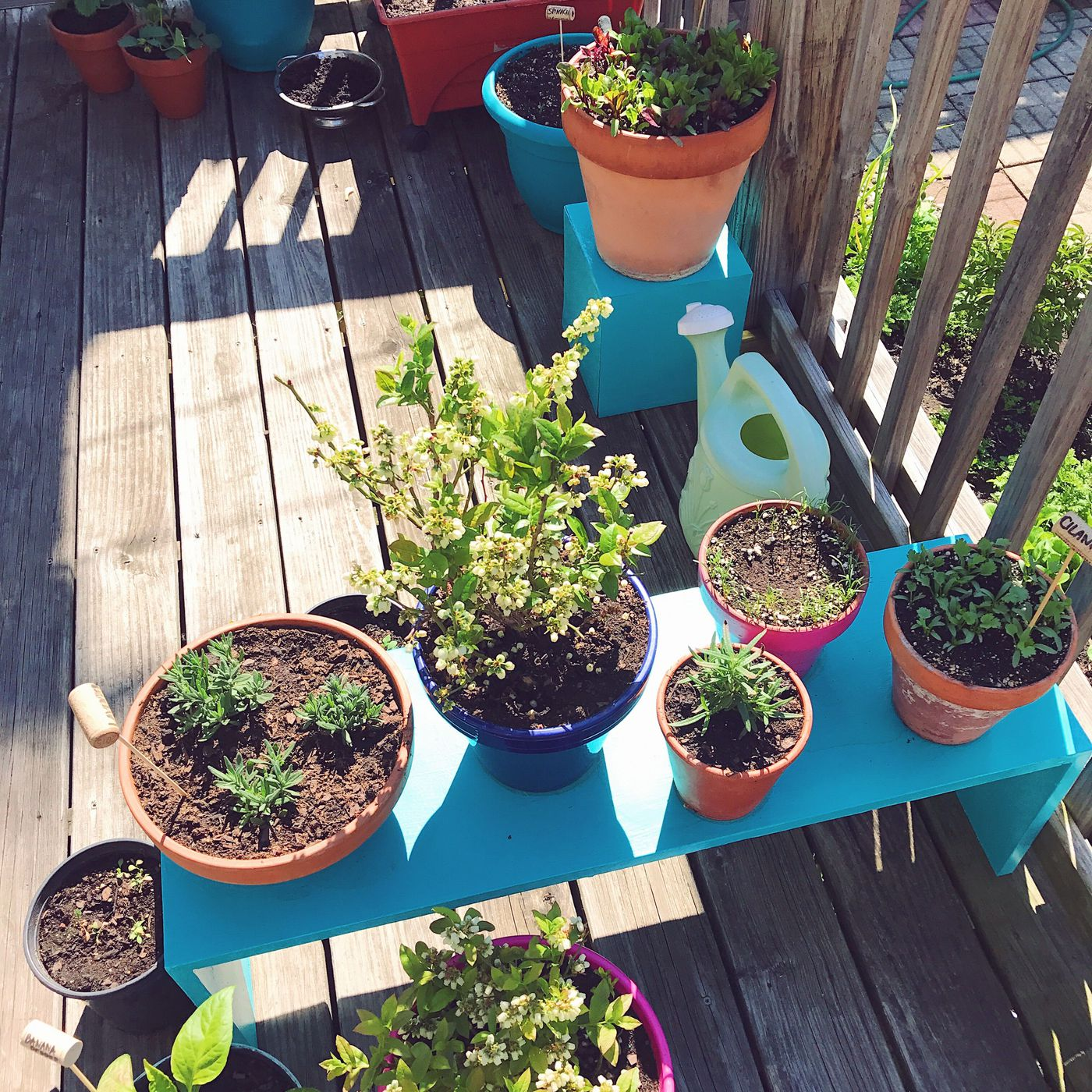 How To Create A Garden On Your Chicago Balcony Tiny Deck Or Shaded