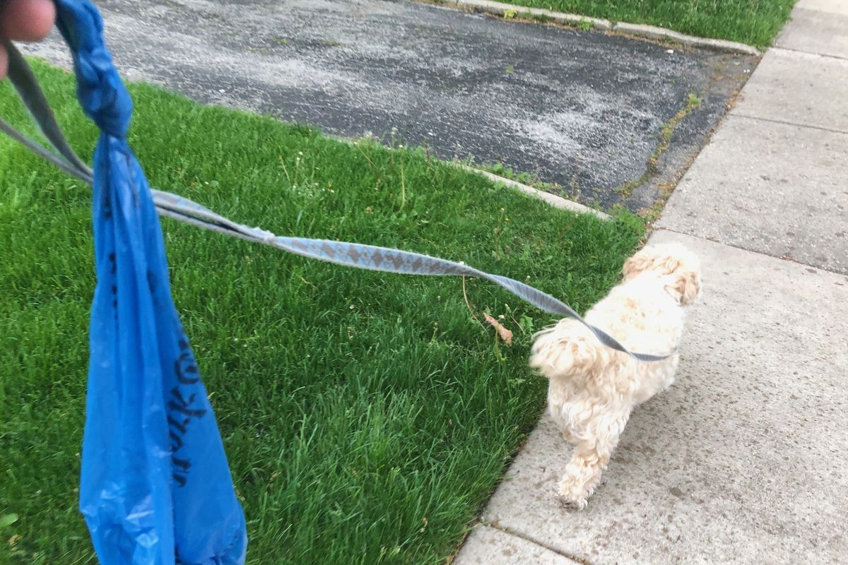 Picking up after your dog - whose trash can should you throw it away in?