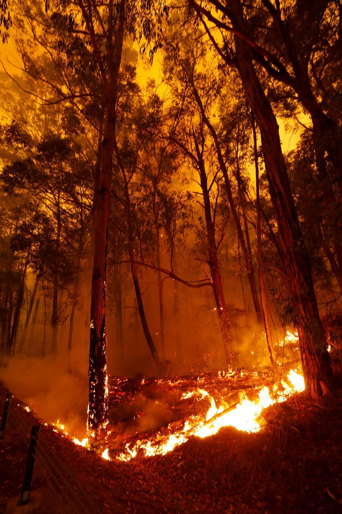 Katastrofalni požar u Australiji - Page 2 Australia_fires_003