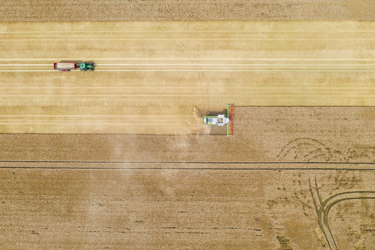 A combine harvester harvests a cornfield in Germany.