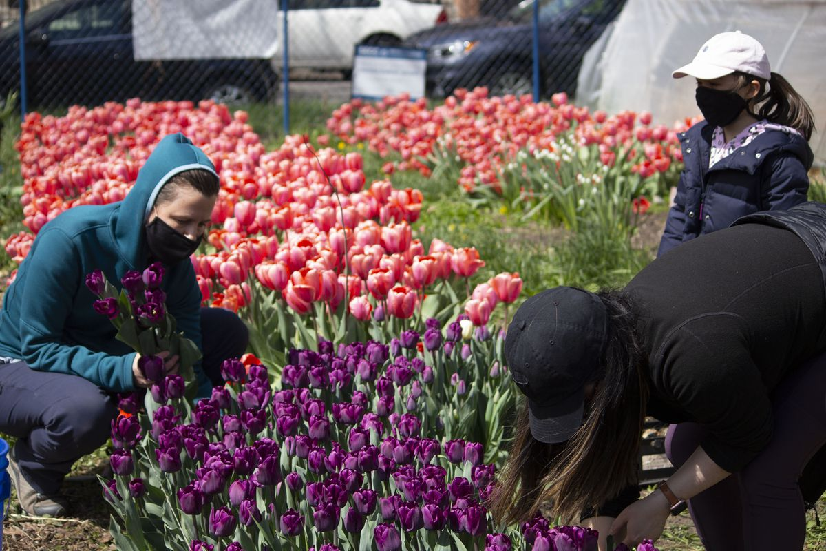 In April, Southside Blooms held a volunteer event for community members to help harvest flowers for the shop's bouquets.