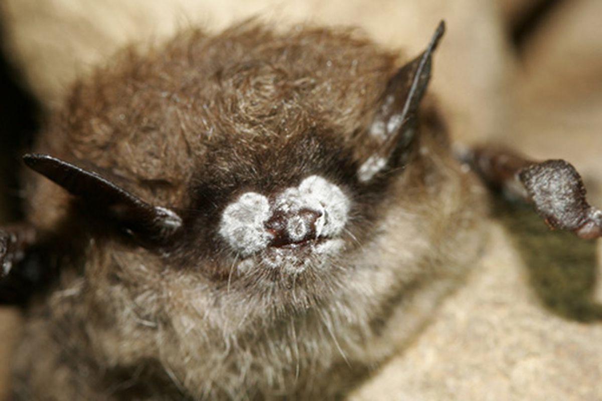 Rabid bat found in Beverly: officials
