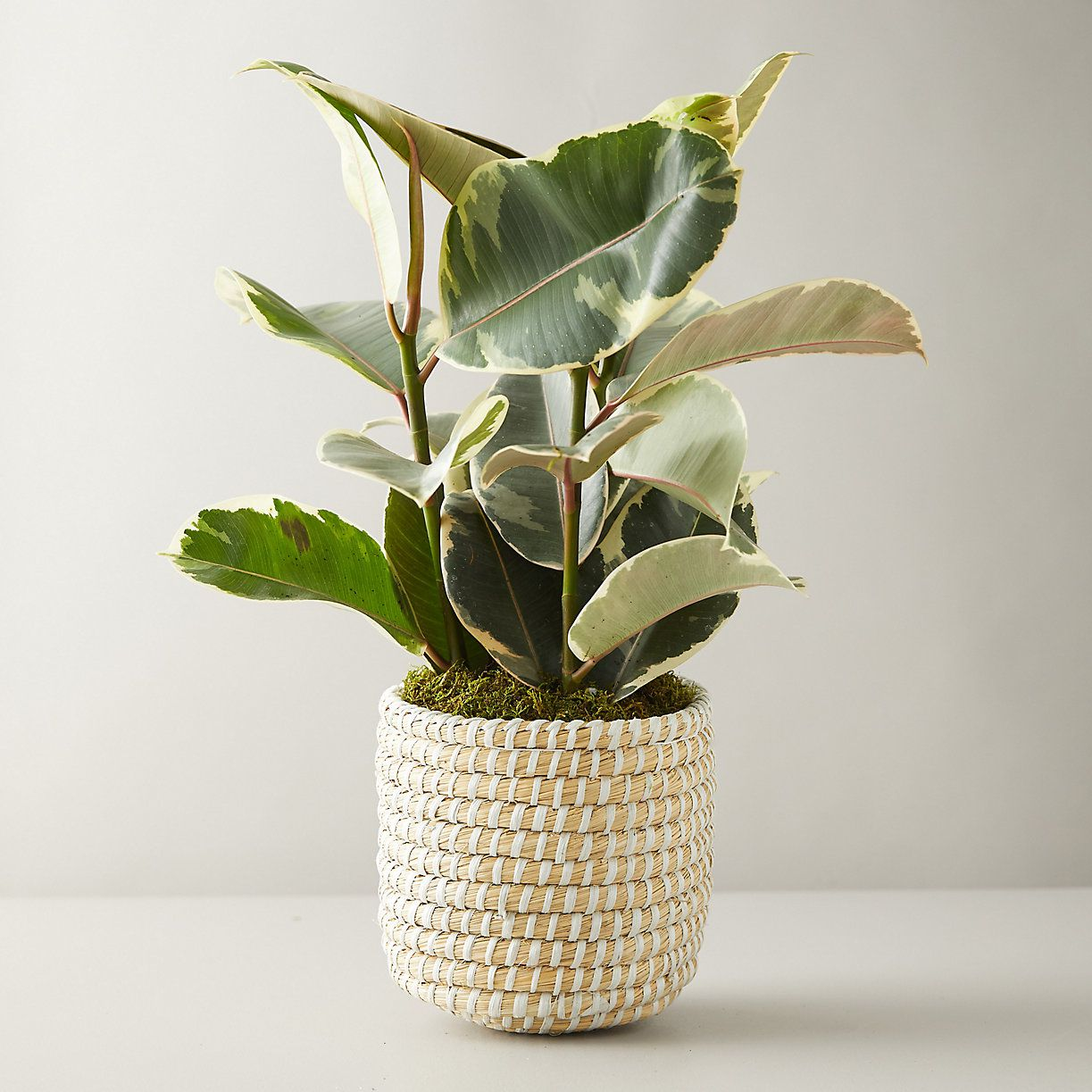 Indoor Plants Online At These
