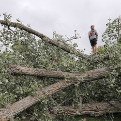 Elijah Counterman climbs on trees that were felled by high winds in Liberty Park in Salt Lake City on Tuesday, Sept. 8, 2020.