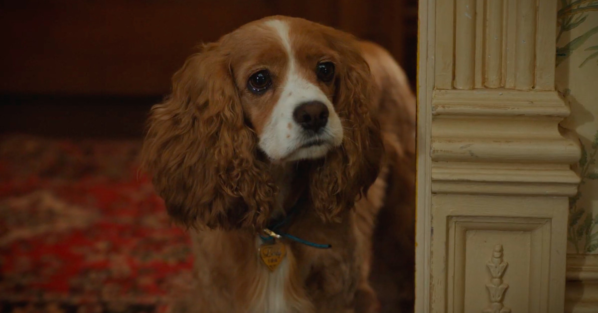 Live-action Lady and the Tramp trailer brings the star-crossed canines to the real world