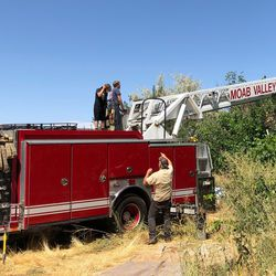 A mother bear and two cubs were removed from a tree by wildlife management in the front yard of a Castle Valley home on Friday, Aug. 23, 2019.
