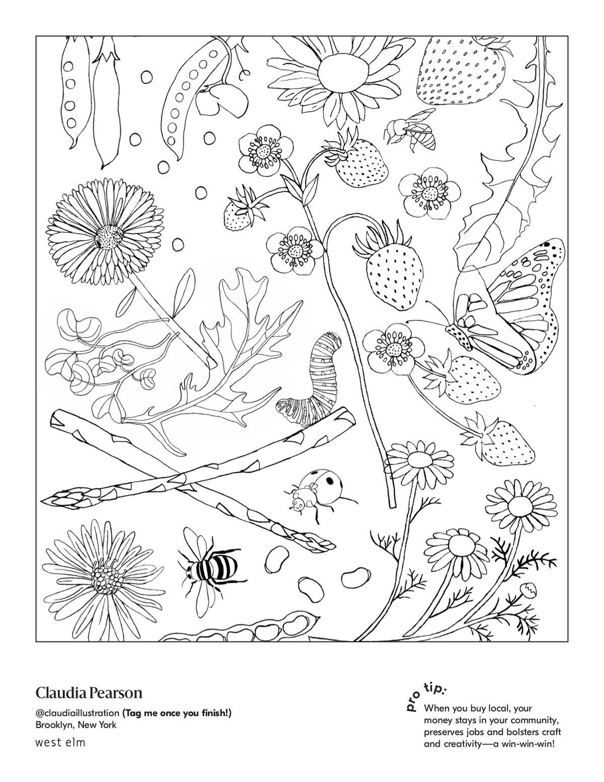 Line drawing of flowers, butterflies, bugs, and bees.