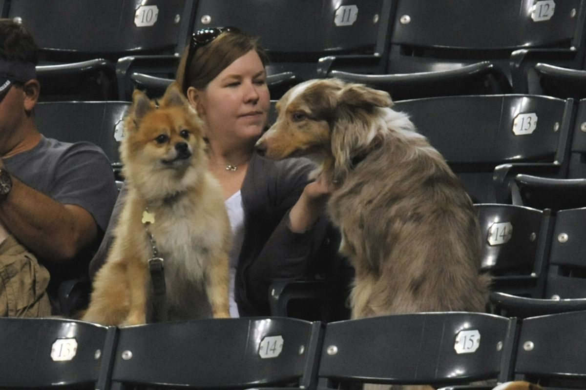 Here is a picture of some dogs to take your mind off this game