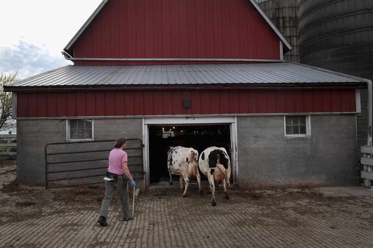 Trump Highlights U.S. Dairy Farmers Hurt By Canadian Tariffs