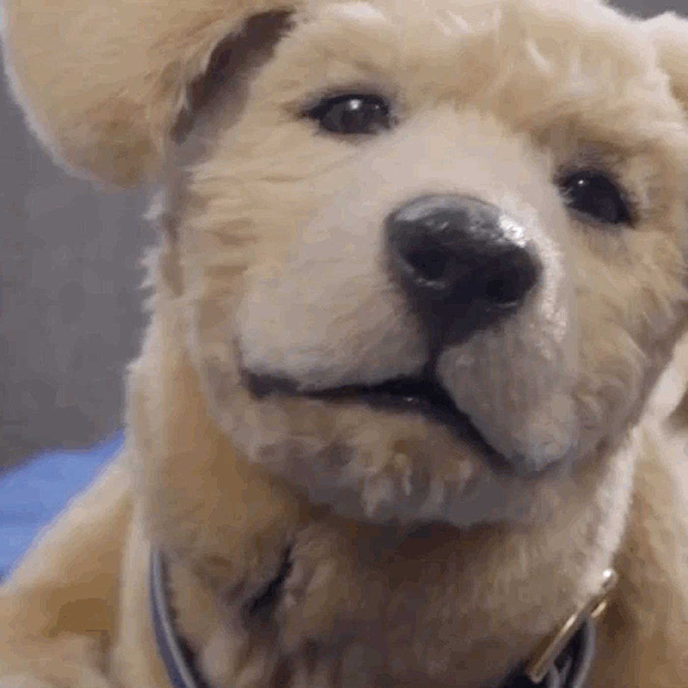 Is this robotic therapy pet the uncanny valley of dog? - The