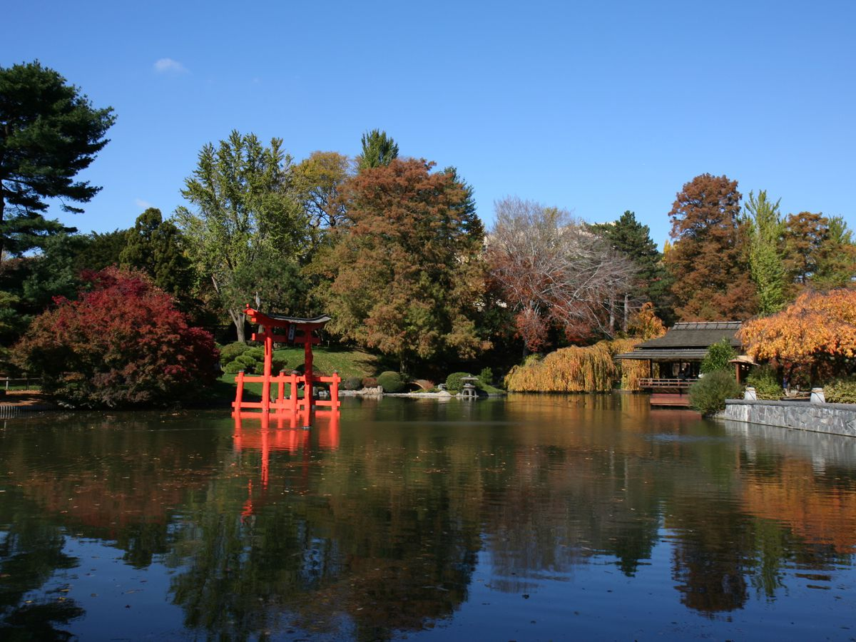 Brooklyn Botanic Garden in the Autumn. There is a pond surrounded by trees with multicolored leaves.