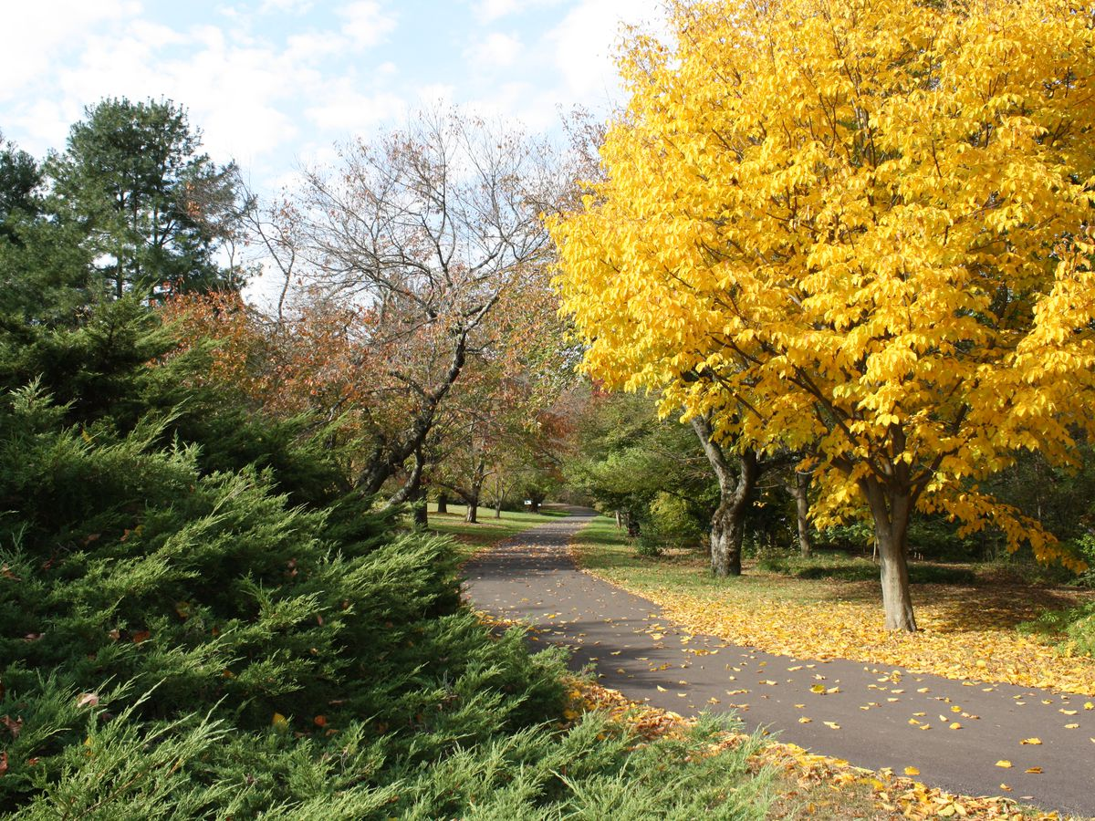Trees with colorful autumn leaves at the Morris Arboretum of the University of Pennsylvania.