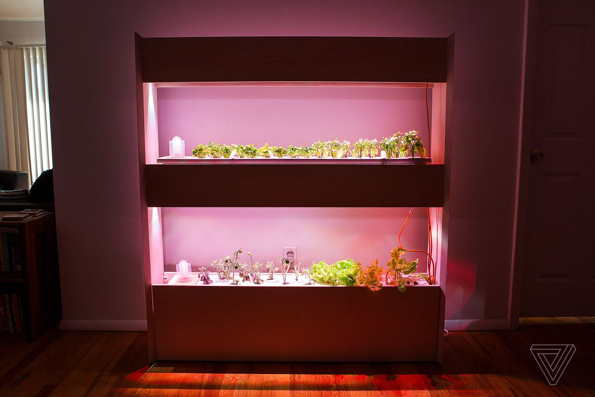 this indoor smart garden helped me grow basil and lettuce with