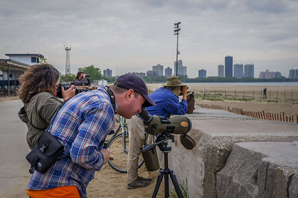 Tamima Itani joins Nate Leahy, 41, in monitoring the piping plovers' nest, May 20. Volunteers have been monitoring the nest daily from 6 a.m. to 8 p.m.