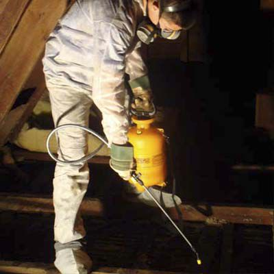 Man Spraying Enzyme Deodorizer To Clean Bat Attic