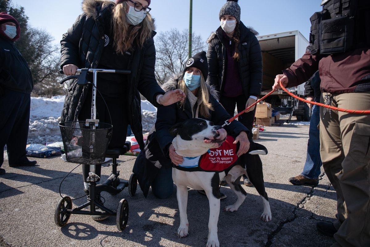 From left to right: Kristy Michalski, volunteer coordinator of Fetching Tails Foundation, Linda Wyka, president of Fetching Tails Foundation, and volunteer Melanie Giovannelli play with Pierre, who is available for adoption.