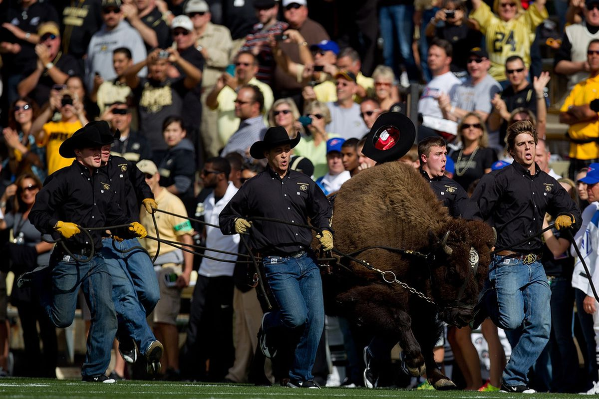 """BOULDER, CO - OCTOBER 22:  """"Ralphie"""" the mascot of the Colorado Buffaloes leads the team onto the field before a game against the Oregon Ducks at Folsom Field on October 22, 2011 in Boulder, Colorado. (Photo by Justin Edmonds/Getty Images)"""