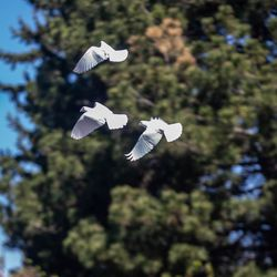 Doves are releasedduring the annual Utah Police Memorial Service at the Capitol in Salt Lake City on Thursday, May 6, 2021. During the service, police officers, family, friends and community leaders honored the 147 Utah police officers killed in the line of duty.