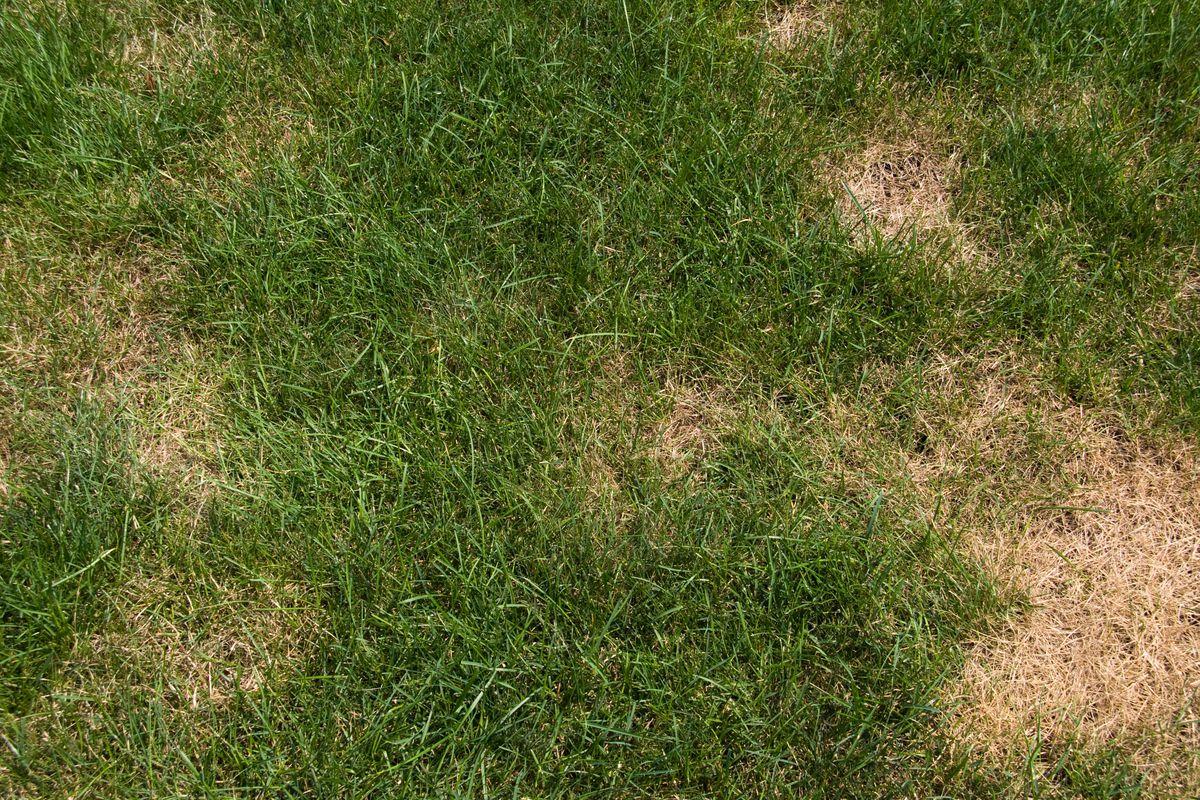 Bad Grass