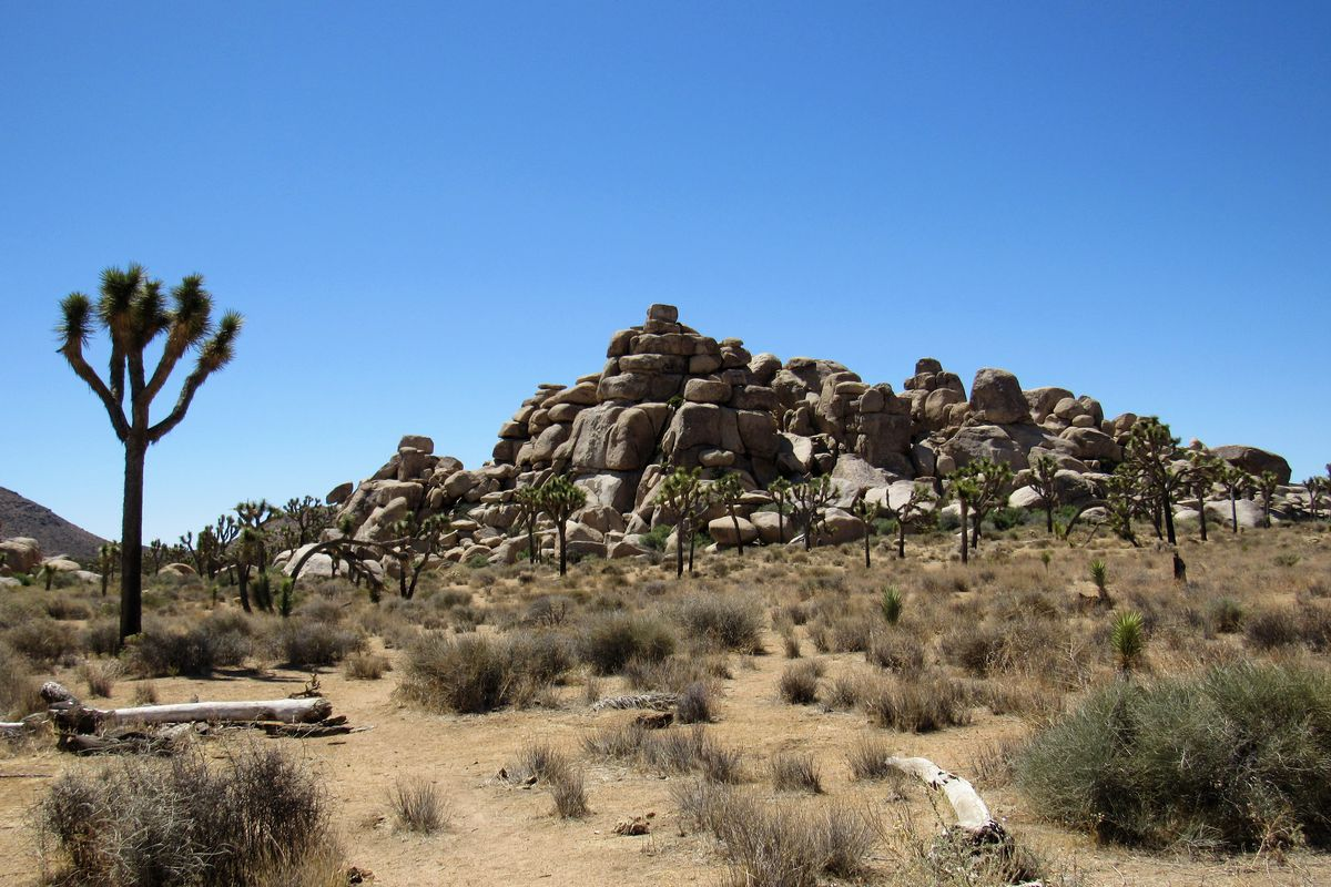 Joshua Tree National Park Is Being Damaged During The Government