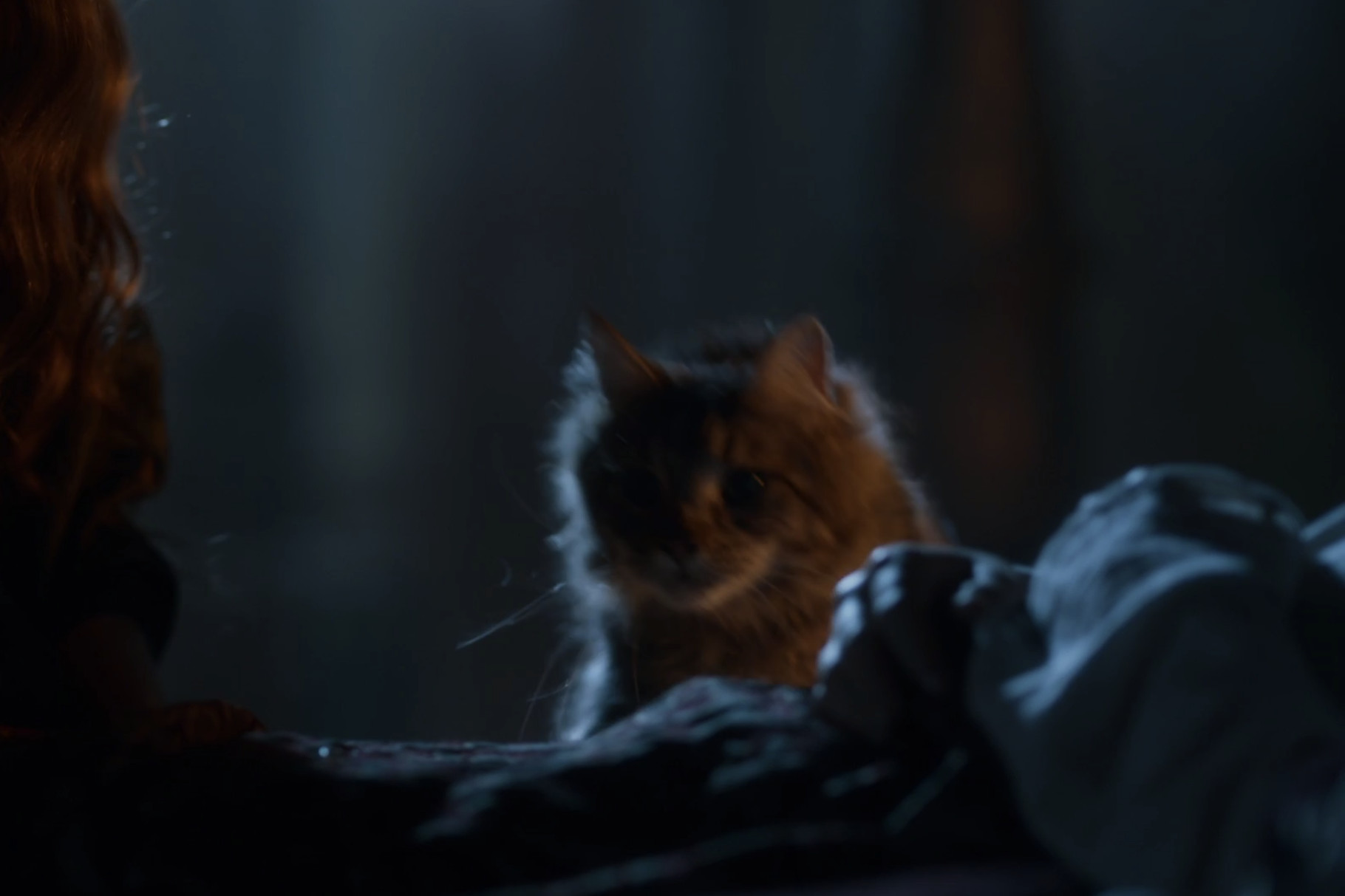 The Death of Ser Pounce