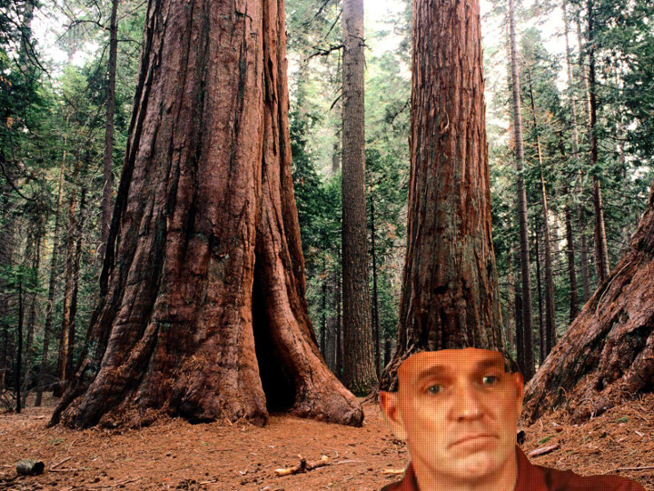 forestjimbo