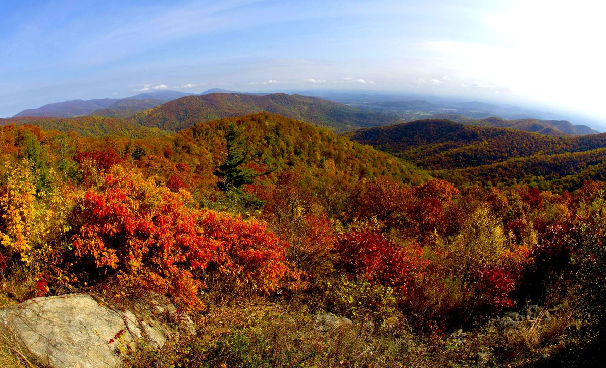 Autumn foliage in the mountains.